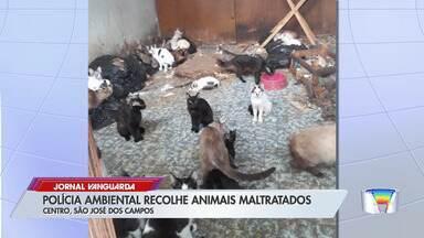 Operação da Polícia Ambiental apreende 80 gatos em casa em São José - Veja as informações no link.
