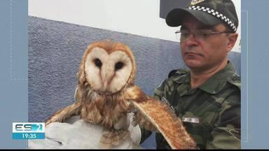 Coruja entra em comércio de Guaçuí, no Sul do ES - Ela estava com a asa machucada.