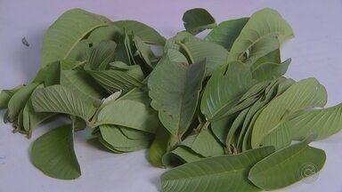 Análise foliar monitora estado de nutrição e permite melhor produção de plantas - Análise foliar monitora estado de nutrição e permite melhor produção de plantas.