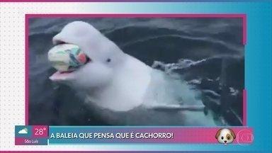 Baleia pensa que é cachorro e pega bola jogada em alto mar - Mais Você investiga vídeo de peixe que parece ter rosto humano