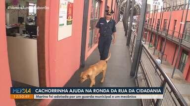 Cadelinha e Guarda municipal viram melhores amigos no Paraná - Os dois criaram uma amizade pelo carinho e não se desgrudam durante o trabalho