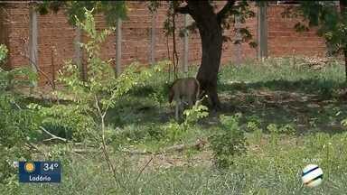 Égua pariu em terreno baldio em Corumbá - Cavalos soltos nas ruas da cidade é problema crônico