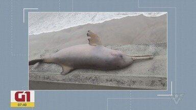 Confira os principais destaques do G1 Santos - Golfinho é encontrado morto com rede de pesca presa ao corpo em Mongaguá.