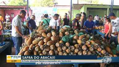 Safra do abacaxi tem movimentado a economia em Santarém - Fruta rica em vitaminas A, B e C e fibras. Nas feiras, o produto está sendo vendido a preços variados.