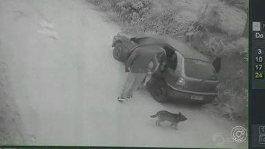 Câmera registra abandono de cachorro em estrada na zona rural de Jarinu - Um cachorro foi abandonado em uma estrada na zona rural de Jarinu (SP) no domingo (24). Imagens de câmera de segurança de uma chácara registraram quando um grupo deixou o animal.