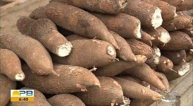 Paraíba Rural: conheça uma plantação de mandioca em Puxinanã - Confira os detalhes com o repórter Artur Lira.