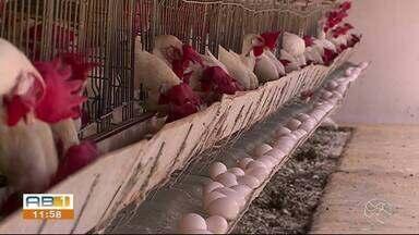 Pernambuco produz mais de onze milhões de ovos por dia - Especialista ressalta a importância do alimento para a saúde.