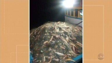 Nova lei estadual da pesca é tema de encontro em Porto Alegre - Pescadores gaúchos afirmam que nova legislação está garantindo melhores resultados na captura de corvina e pescadinha.