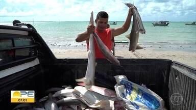 Óleo no litoral: governo recomenda evitar consumir dois tipos de peixes - Segundo estado, xaréu e sapuruna não devem ser consumidos de forma temporária.