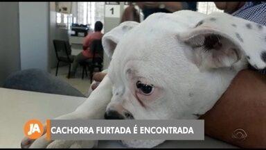Cadela furtada de clínica veterinária é recuperada pela polícia - O caso aconteceu em Pelotas no início da semana.