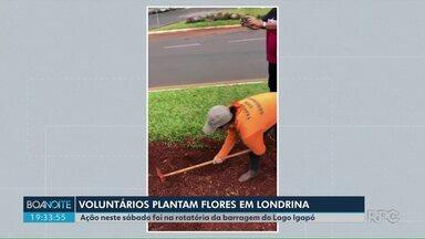 Voluntários plantam flores em Londrina - Ação neste sábado foi na rotatória da barragem do Lago Igapó.
