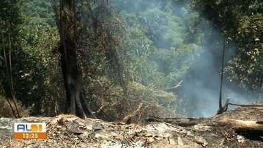 Incêndio em vegetação tem preocupado moradores da Chá da Jaqueira - Corpo de Bombeiros trabalha para controlar as chamas no local.