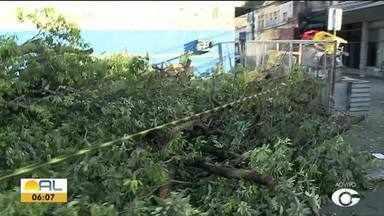 Rua continua interditada após quede de árvore no centro de Maceió - Dois carros foram atingidos.
