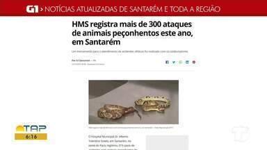 Atendimentos a vítimas de animais peçonhentos é destaque no G1 Santarém e região - Acesse essa e outras notícias pelo celular, tablet ou computador.