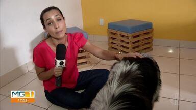 É o Bicho: saiba como identificar ansiedade animal - Segundo especialistas, ficar sozinho em casa e sem fazer atividades de lazer, pode agravar situações de ansiedade.