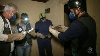 Mutirão para combater morcegos transmissores da raiva animal é feito na região de Avaré - Um mutirão de combate ao morcego transmissor da raiva animal está sendo realizado pela Defesa Agropecuária na região de Avaré (SP) até sexta-feira (13).