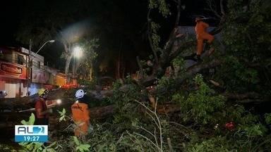 Árvores centenárias da Rua das Árvores, no centro de Maceió, são cortadas - Ao todo, cinco oitizeiros serão cortados.