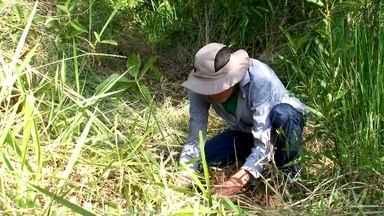 O esforço de quem tem paixão por plantar árvores - Até paramotor é usado para ajudar no reflorestamento.