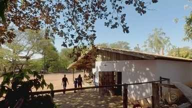 Família de Uchoa inova e transforma fazenda em 'café rural' - Em Uchoa (SP), uma família que morava na capital resolveu investir em um sonho antigo e transformou a fazenda da família em café rural.