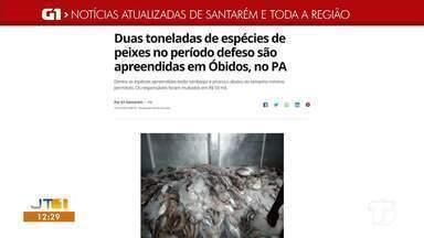 Apreensão de pescado no defeso em Óbidos é destaque no G1 Santarém e região - Acesse essa e outras notícias pelo celular, tablet e computador.