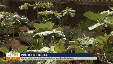 Hortas estão sendo implantadas em escolas públicas de Belterra - Conheça o projeto que tem incentivado crianças a ter uma alimentação mais saudável.