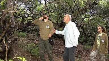 Espécie rara de tamanduá é encontrada no Delta do Parnaíba - Espécie rara de tamanduá é encontrada no Delta do Parnaíba
