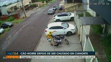 Cão morre após ser chutado por gari em Cianorte - Imagens flagraram o momento em que um cachorro é agredido pelo gari.