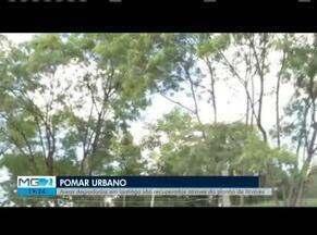 Locais usados para descarte de lixo dão lugar a pomares em Ipatinga - Projeto foi criado pela Prefeitura de Ipatinga.