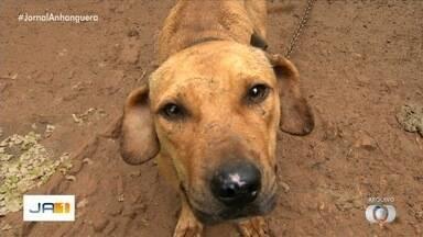 Polícia investiga ligação entre rinhas de cães no interior de São Paulo e Anápolis - Investigação apura se há conexão entre os casos.