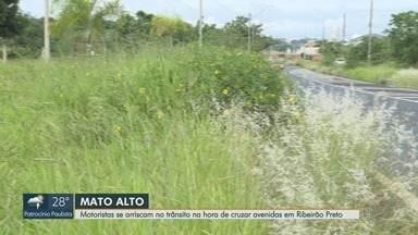 Mato alto causa perigos aos motoristas em avenidas de Ribeirão Preto, SP - Problema que parece simples tem complicado o trânsito da cidade.