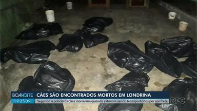 Polícia civil procura motorista que transportou cães encontrados mortos em Londrina - Ao todo, 25 cães morreram após serem transportados em um carro furgão. O veículo quebrou e os cachorros ficaram trancados por 40 minutos no local.