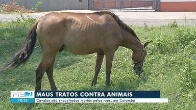 Cavalos são encontrados mortos pelas ruas, em Corumbá - Cavalos são encontrados mortos pelas ruas, em Corumbá