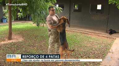 Cães são treinados pela Polícia Civil para ajudarem na busca por desaparecidos - Treinamento acontece no Centro de Operações da PC.