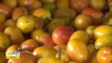 Cresce procura de frutas de época em Petrolina - Com a chegada das chuvas no Sertão, começou a colheita de frutas como siriguela.