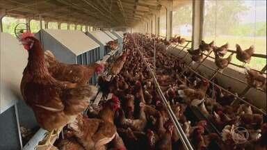 Globo Rural – Edição de 12/01/2020 - Programa fala sobre a estiagem no Rio Grande do Sul, o mercado do boi gordo, a colheita do guaraná na Amazônia e as melhores reportagens de 2019.