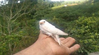 Família de Socorro (SP) resgata e liberta andorinha albina - Esse foi um dos flagrantes de aves albinas no Sudeste.