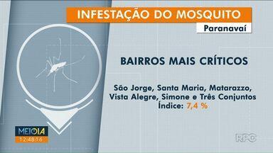 Índice de infestação mostra situação preocupante em Paranavaí - Confira as regiões com índice mais alto.