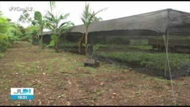 Projeto incentiva implantação de sistemas agroflorestais em Altamira - A iniciativa tem o apoio de uma empresa norte-americana.