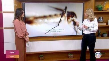 Dengue: Ministério da Saúde alerta que a doença pode ser mais grave - Aprenda a se prevenir e ajude a evitar epidemia