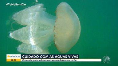 Veja o que fazer e como prevenir queimaduras de águas vivas durante os banhos de mar - Acidentes com estes animais são mais frequentes no verão.