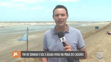 Número de águas-vivas surpreende banhistas na Praia do Cassino - Foram registradas mais de 3.700 ocorrências de queimaduras neste fim de semana.