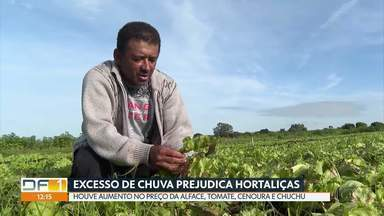 O excesso de chuva prejudica a qualidade de hortaliças - Houve aumento no preço de vários produtos, como alface, tomate, chuchu e cenoura.