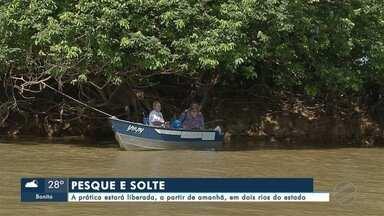 Liberação de pesque e solte nos principais rios do Estado - A pratica estará liberada, a partir de amanhã, nos rios Paraguai e Paraná
