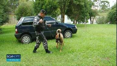 Além de companheiros de trabalho, cão e policial são amigos - Delfino e Zeca dividem a rotina nas operações contra o tráfico de drogas.