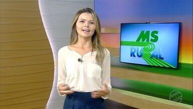 MS Rural - edição de domingo, 02/02/2020 - MS Rural - edição de domingo, 02/02/2020