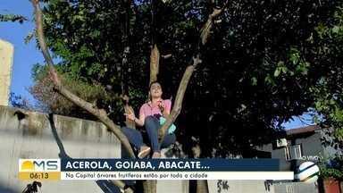 Em Campo Grande árvores frutíferas estão por toda a cidade - Em Campo Grande árvores frutíferas estão por toda a cidade