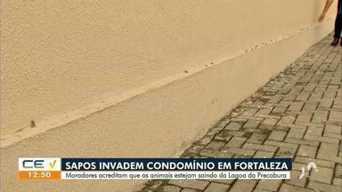 Sapos invadem casas e preocupam moradores - Saiba mais no g1.com.br/ce