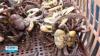 Segundo período de defeso do caranguejo-uçá em 2020 começa nesta segunda-feira - A comercialização só está permitida para o crustáceo em estoque e devidamente autorizado.