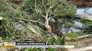 Poda ilegal de árvores revolta moradores de Rio Marinho, em Vila Velha, ES - Sem autorização, um homem chegou no local e cortou as árvores.