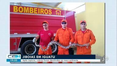 Jiboias são capturadas em Iguatu - Confira mais notícias em g1.globo.com/ce